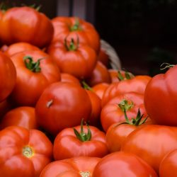 Pestovanie paradajok - ako si zabezpečiť bohatú úrodu?