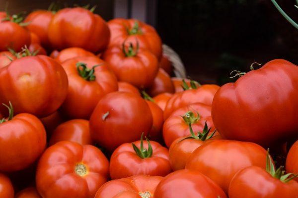Pestovanie paradajok – ako si zabezpečiť bohatú úrodu?
