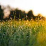 Jarná údržba trávnika – ako sa oň postarať, aby vyzeral čo najlepšie?