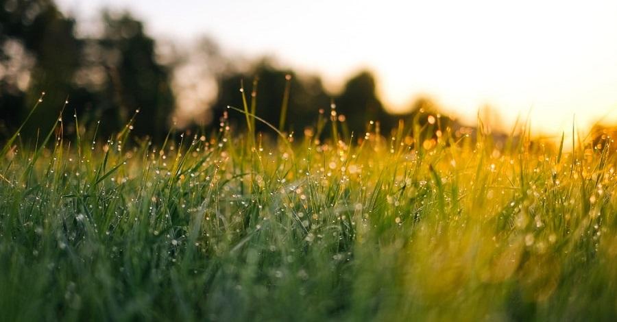 Jarná údržba trávnika - ako sa oň postarať, aby vyzeral čo najlepšie?